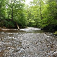 Waterfall Week Day 3 – Ricketts Glen Kitchen Creek