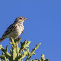 Madagascar Birds Assortment