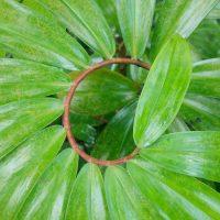 Plant Spiral