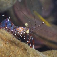 Shrimps (Day 2) – Unidentified Shrimps