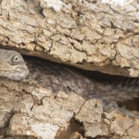 Hiding Merrem's Madagascar Swift