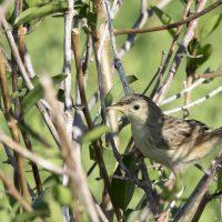 More Madagascar Birds