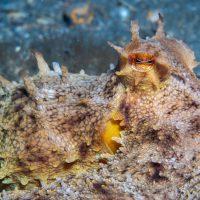 A Rather Spikey Octopus