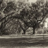 A Couple B&W From Wormsloe