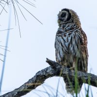 Hawk and Owl