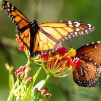 Florida Butterfly Assortment